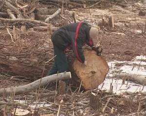 Сруб деревьев