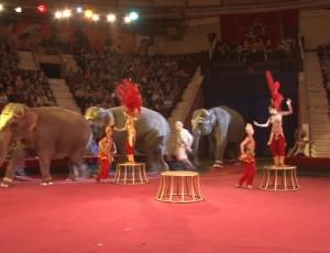 Otravlenie slonov