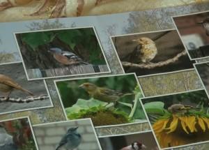 Den ptic